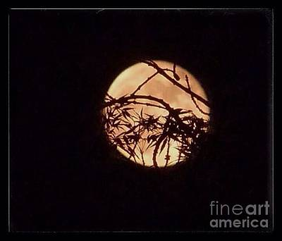 Photograph - Artistic Moon  by Susan Garren