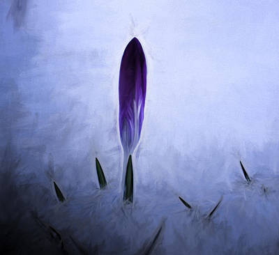 Lilac Time Photograph - Artistic Painterly Crocus In Snow by Leif Sohlman