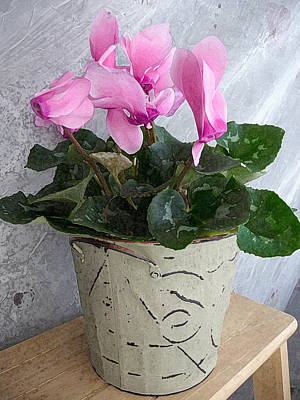 Photograph - Artistic Potted Cyclamen II by Margie Avellino