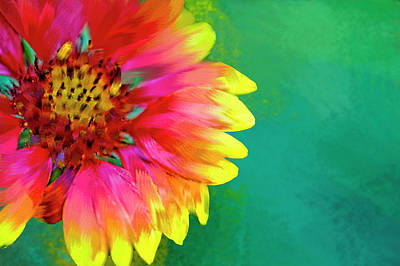 Gaillardia Photograph - Artistic Rendition Of Indian Blanket by Rona Schwarz