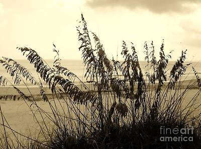 Photograph - Artistic - Sea - Oats by D Hackett