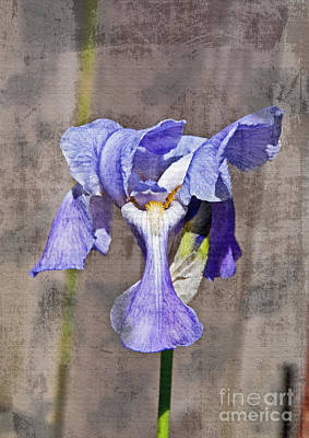 Photograph - Artistic Textured Purple Japanese Iris Flower Art Prints by Valerie Garner