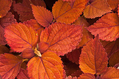 Photograph - Artistry In Leaves by Paul Miller