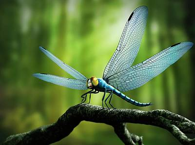 Meganeura Photograph - Artwork Of Giant Dragonfly Meganeura by Mark Garlick