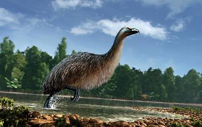 Moa Photograph - Artwork Of Giant Moa In New Zealand by Mark Garlick