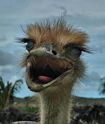 Photograph - Aruba Ostrich Farm by Steven Richman