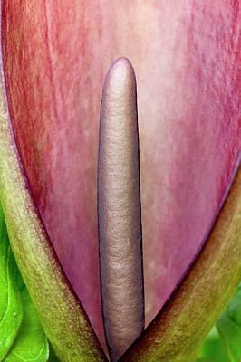 Arum Apulum Inflorescence Art Print by Dr Jeremy Burgess