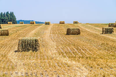 Photograph - Harvest Time by Michael Goyberg