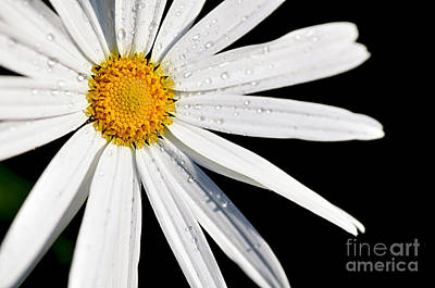 Photograph - As Bright As A Daisy... by Kaye Menner