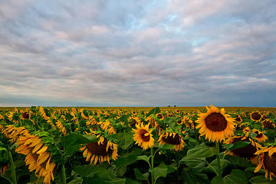 Art Print featuring the photograph As Far As The Eye Can See by Ronda Kimbrow