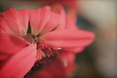 Pink Flower Digital Art - As I Sit By The Window by Laurie Search