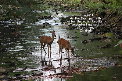 Southern Indiana Digital Art - As The Deer Pants For Water by Lorna Rogers Photography