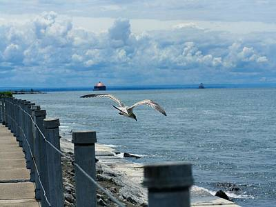 Flying Seagull Photograph - As The Seagull Flies by Gothicrow Images