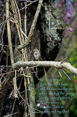 Photograph - As The Sparrow  by Tikvah's Hope