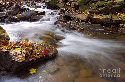 Photograph - As The Stream Runs By In Autumn by Barbara McMahon