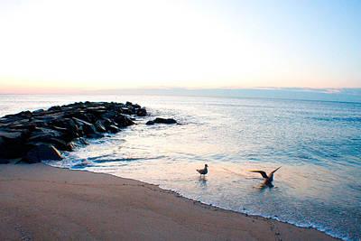Photograph - Asbury Seagulls by Jon Emery