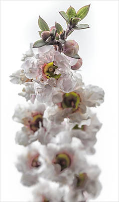 Still Life Royalty-Free and Rights-Managed Images - Ascension by Robert Ullmann