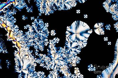 L-ascorbic Acid Photograph - Ascorbic Acid Microcrystal Polarized Light Colors by Stephan Pietzko