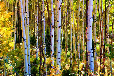 Photograph - Aspen Grove by Allen Beatty