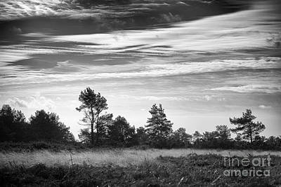 Nature Study Digital Art - Ashdown Forest In Black And White by Natalie Kinnear