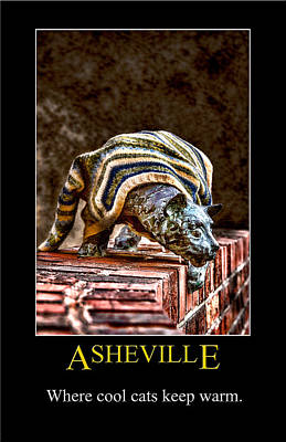 Digital Art - Asheville Cats Poster by John Haldane
