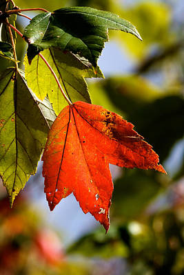 Photograph - Asheville First Fall Color by David Beebe