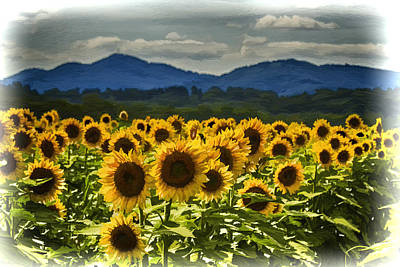 Photograph - Asheville Sunflowers by John Haldane