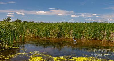 Photograph - Ashley River South Carolina II by Bernd Laeschke