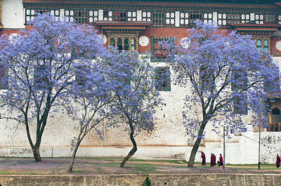Bhutan Photograph - Asia, Bhutan Monks Walking By Jacaranda by Jaynes Gallery