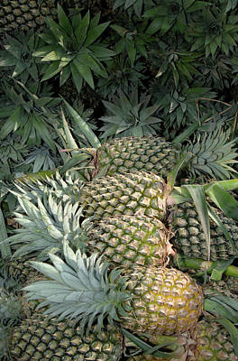 Asia, Vietnam Pineapples In The Hold Art Print
