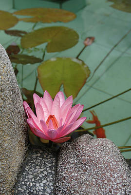 Asia, Vietnam Water Lily In A Temple Art Print by Kevin Oke