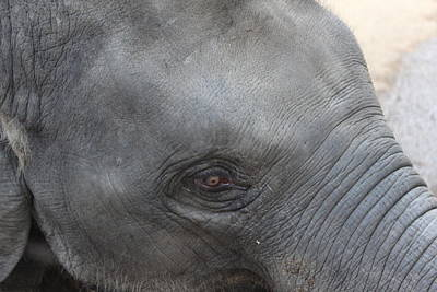 Asian Elephant Face Art Print by Colin Smeaton