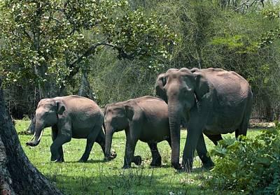 Asian Elephant Group Art Print by K Jayaram
