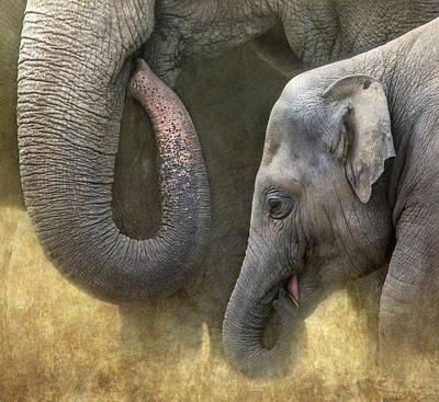 Photograph - Asian Elephants by Angie Vogel