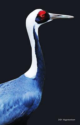 Photograph - Asian White Naped Crane by DiDi Higginbotham