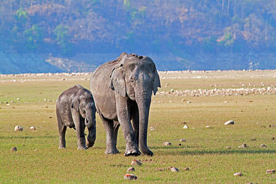 Animal Family Photograph - Asiatic Elephant by Aditya Laghate