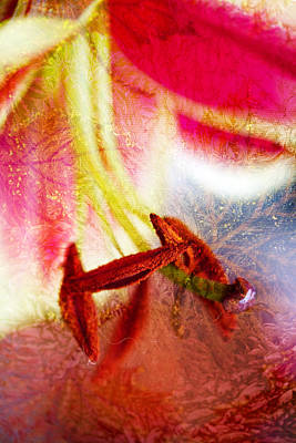 Photograph - Asiatic Lily - The Works by Marie Jamieson