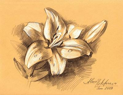 Drawing - Asiatic Lily Flower With Bud Sketch by Alena Nikifarava