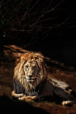 Photograph - Aslan by Emily Stauring