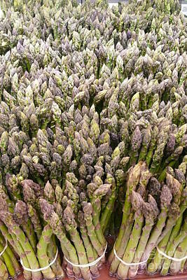 Asparagus Bunches Original by Betsy Cotton