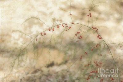 Asparagus Art Print by Elaine Teague