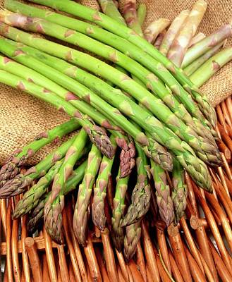 Asparagus Wall Art - Photograph - Asparagus Spears (asparagus Officinalis) by Ray Lacey/science Photo Library