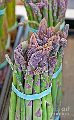Photograph - Asparagus Stalks Bound With Rubber Bands by Valerie Garner