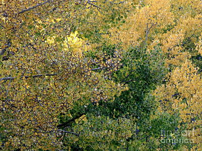 Photograph - Aspen 3 by Fred  Sheridan