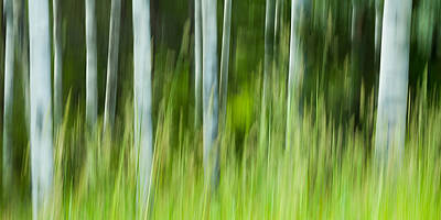 Photograph - Aspen Abstract 2 by Linda McRae