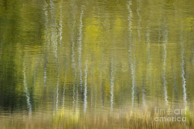 Photograph - Aspen Abstract by Dee Cresswell