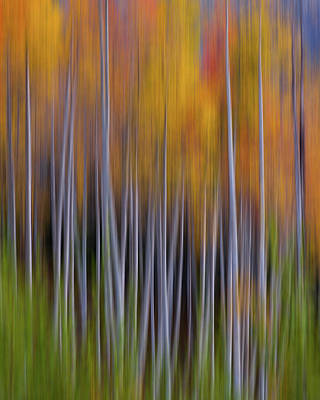 Photograph - Aspen Abstract by Hansrico Photography