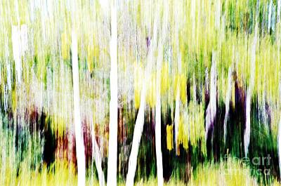 Photograph - Aspen Abstract by Randy J Heath