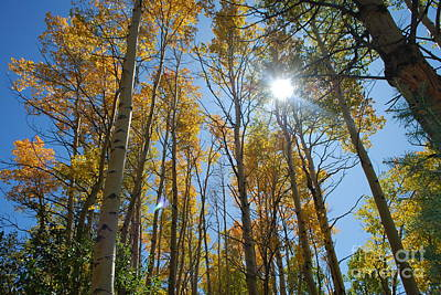 Aspen Afternoon Art Print by William Wyckoff
