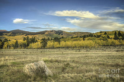 Photograph - Aspen And Boulder by David Waldrop